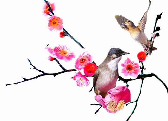 子午卯酉哪种桃花最旺
