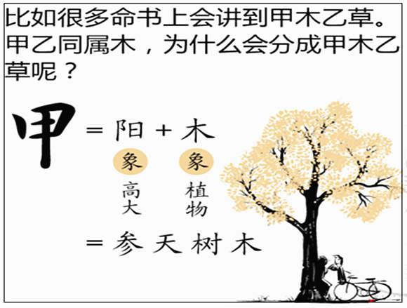 甲木是什么意思