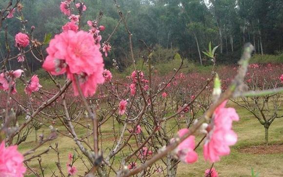 什么是咸池桃花