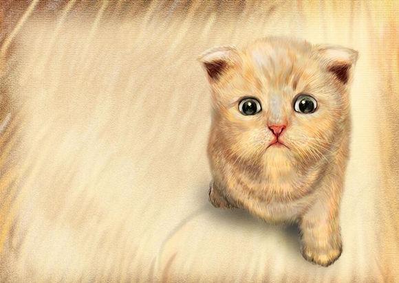 什么属相者不适合养猫
