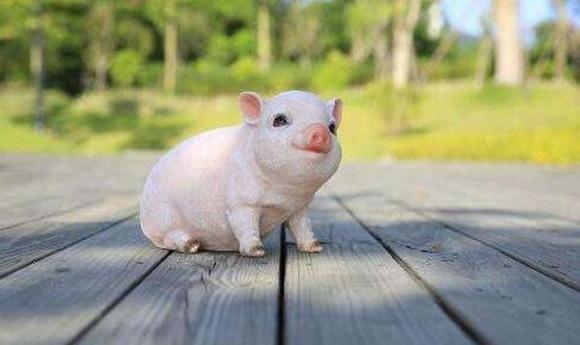 2019年属猪者的运势如何