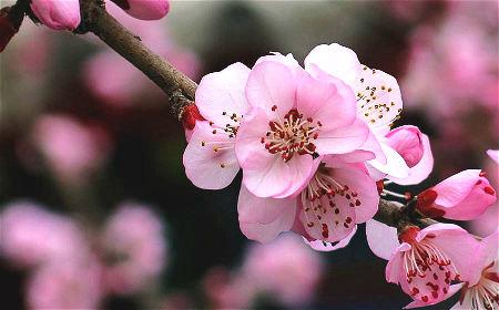 招桃花的风水