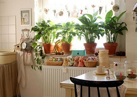 厨房放什么植物风水好