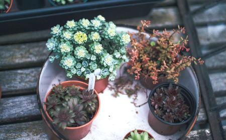 公司植物摆放风水