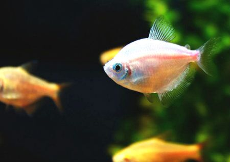 养鱼的风水有什么讲究
