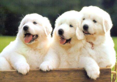 养狗的风水禁忌