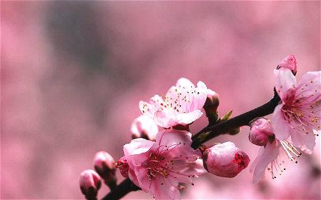 怎么化解桃花劫