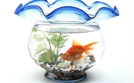 公司风水鱼缸应如何摆放