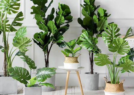 什么绿植可以改风水