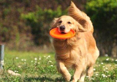 不适合养狗的风水