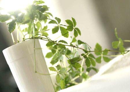 什么植物对风水不好