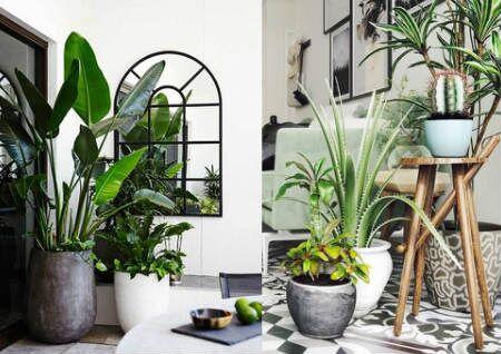 旺财的家居风水植物