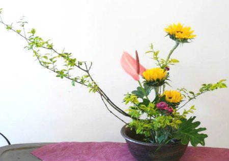 家庭花卉摆放风水讲究