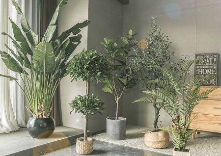 家里植物摆放风水禁忌