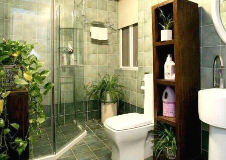 卫生间什么植物旺风水