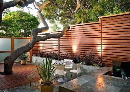 院子里栽什么树风水好