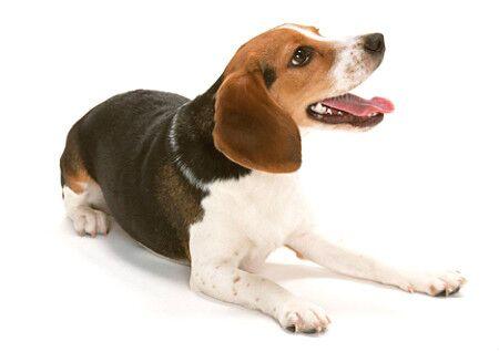 家中养狗的风水知识