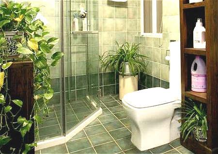 卫生间放植物风水好