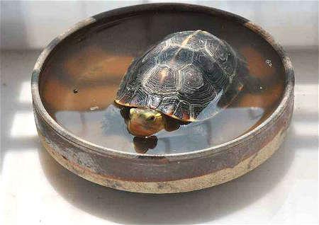 办公室养龟风水