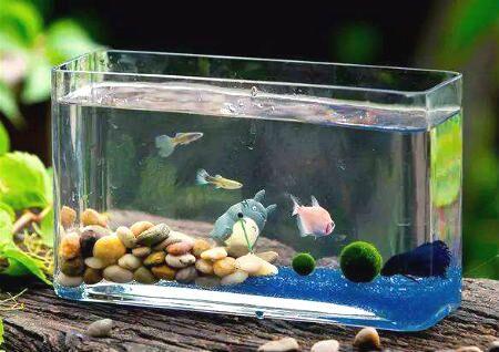 店铺鱼缸摆放风水