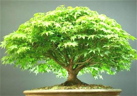 植物与风水