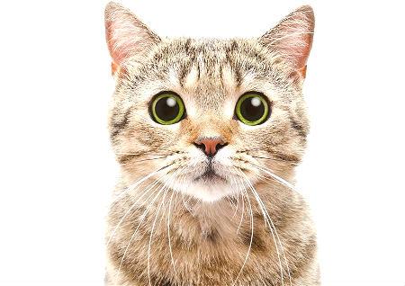 养猫的风水讲究