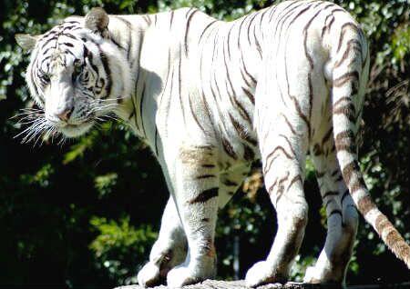 白虎煞是什么