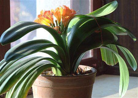 家居阳台风水植物
