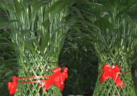 开业送风水植物