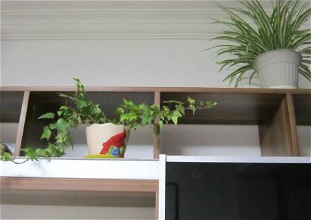 电视旁的风水植物