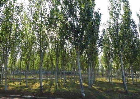 风水上吉凶的庭院树木