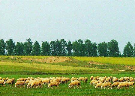 不宜建设养殖场风水