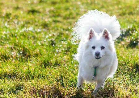 养宠物需注意的风水