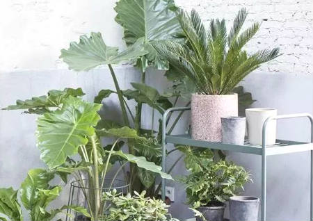 店铺植物摆放风水宜忌