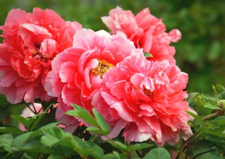 鲜花的风水作用