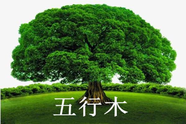 八字中的五行木该如何理解