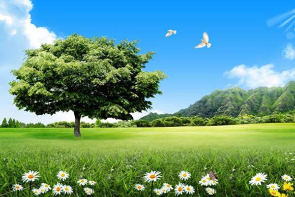 十天干甲木与乙木的区别