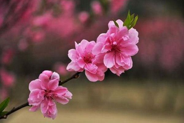 八字正桃花与烂桃花的具体区别
