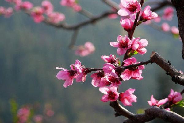 八字预测桃花劫的时间