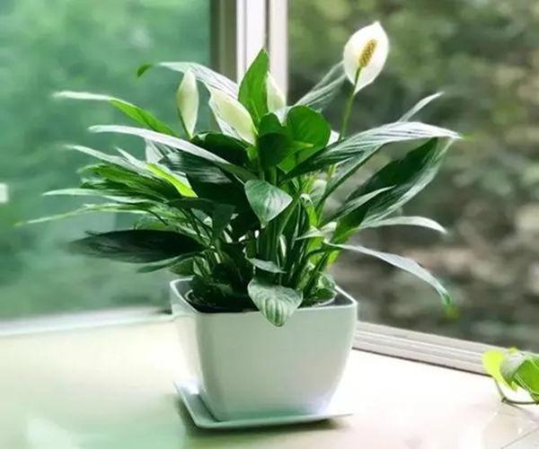 居家种养植物的喜忌原则