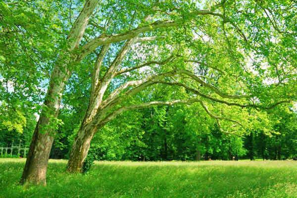 八字五行之木的喜与忌