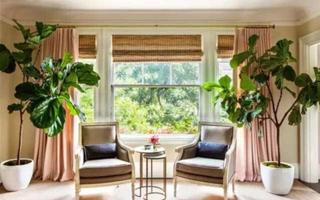 客厅适合养什么花和植物好风水