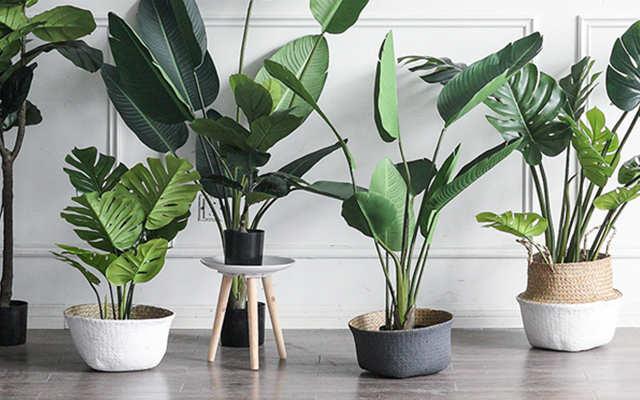 客厅养什么植物风水好
