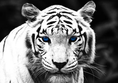 白虎煞是什么意思