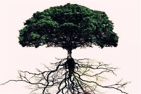八字通根与有根的区别.jpg