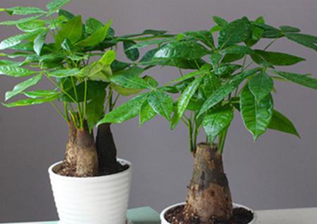 客厅财位放什么植物最好风水