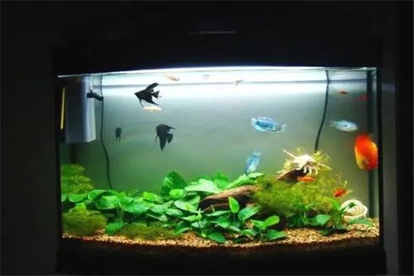 客厅鱼缸的风水.jpg